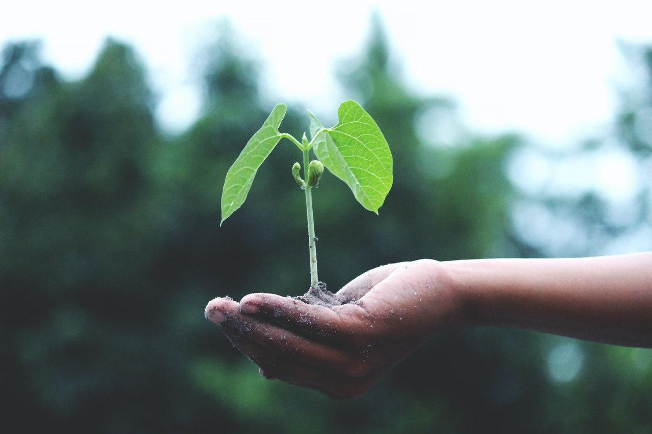 person holding a green plant 1072824